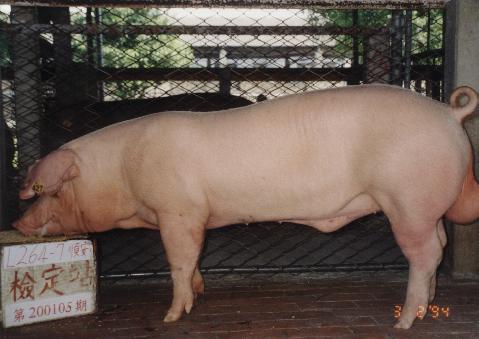 中央畜產會200105期L0264-07拍賣照片