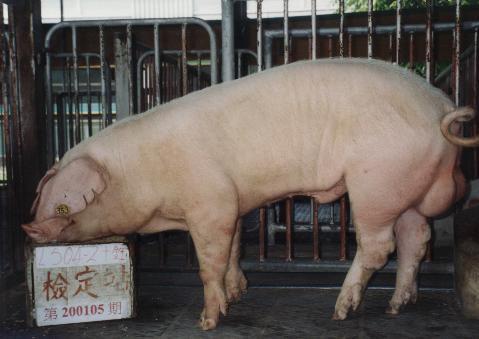中央畜產會200105期L0504-02拍賣照片