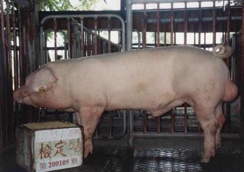 中央畜產會200105期L1135-11拍賣照片