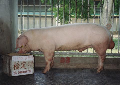 中央畜產會200105期L1140-06拍賣照片