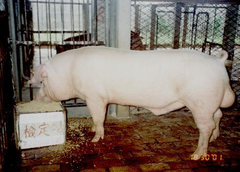 中央畜產會200107期L0158-10拍賣照片