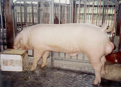 中央畜產會200107期L1383-10拍賣照片