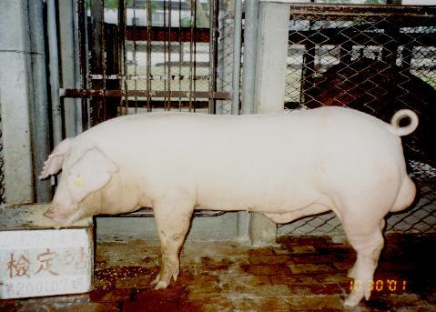 中央畜產會200107期L1827-01拍賣照片