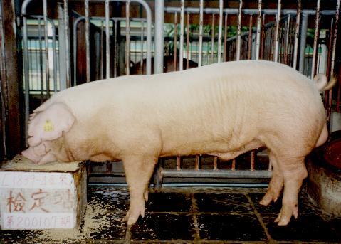 中央畜產會200107期L1839-04拍賣照片