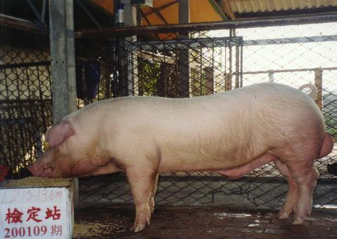 中央畜產會200109期L0215-13拍賣照片