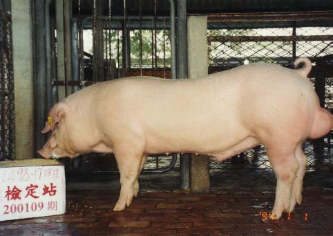 中央畜產會200109期L0498-17拍賣照片