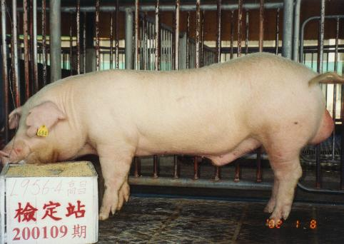 中央畜產會200109期L0956-04拍賣照片