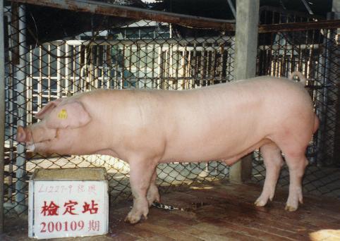 中央畜產會200109期L1227-09拍賣照片