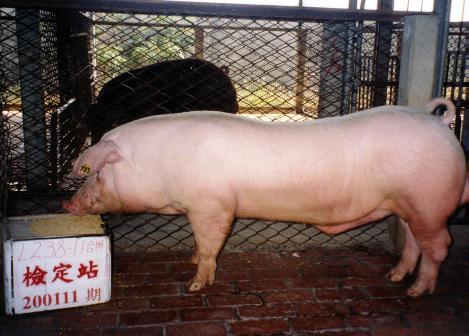 中央畜產會200111期L0238-11拍賣照片