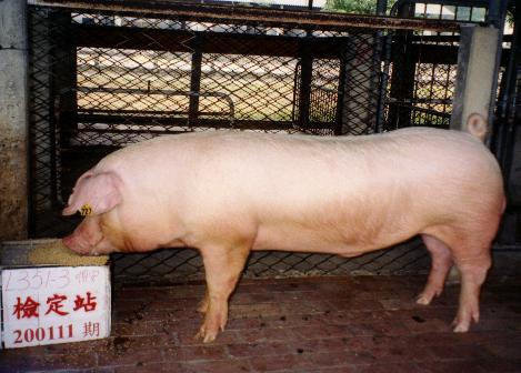 中央畜產會200111期L0351-03拍賣照片
