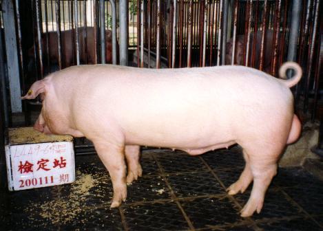 中央畜產會200111期L0449-06拍賣照片