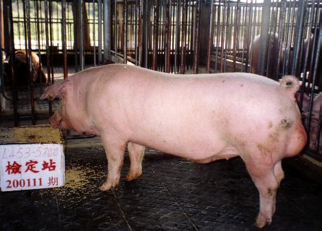 中央畜產會200111期L0453-05拍賣照片