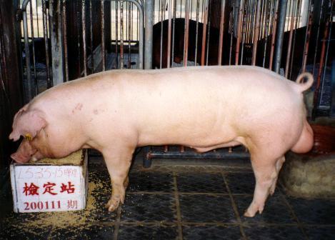 中央畜產會200111期L0535-15拍賣照片