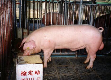 中央畜產會200111期L0617-07拍賣照片