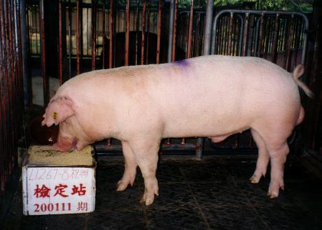 中央畜產會200111期L1267-08拍賣照片
