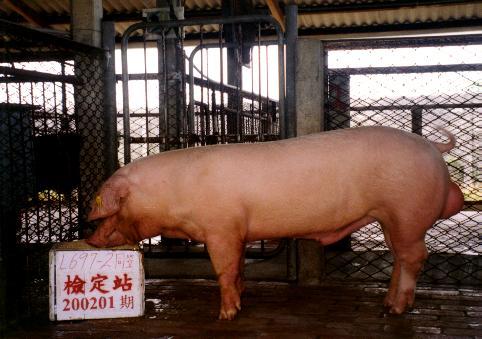 中央畜產會200201期L0697-02拍賣照片