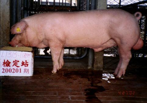 中央畜產會200201期L1315-11拍賣照片