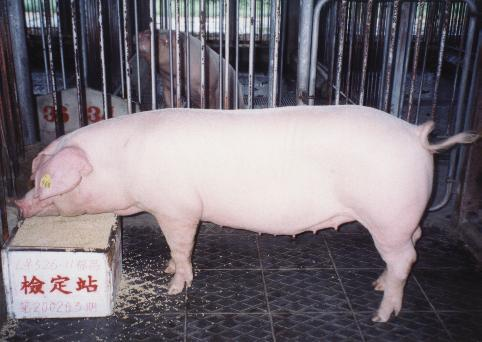 中央畜產會200203期L0526-11拍賣照片