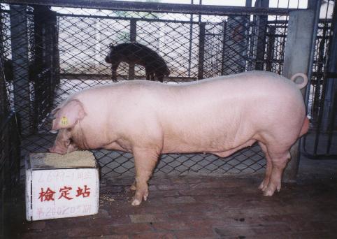 中央畜產會200203期L0699-01拍賣照片