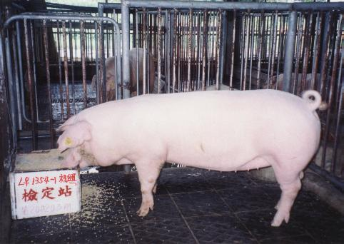 中央畜產會200203期L1354-01拍賣照片
