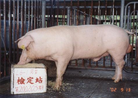 中央畜產會200205期L0006-01拍賣照片