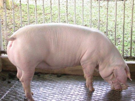 中央畜產會200205期L0357-03體型-全身相片