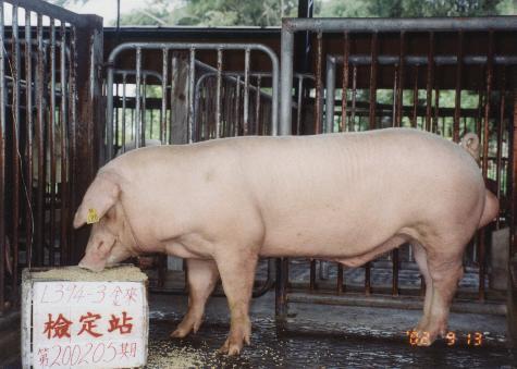 中央畜產會200205期L0394-03拍賣照片
