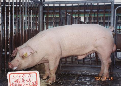 中央畜產會200205期L0559-04拍賣照片