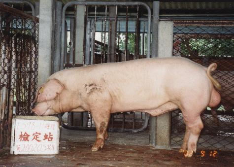中央畜產會200205期L0598-11拍賣照片