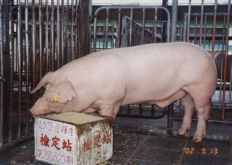 中央畜產會200205期L0598-18拍賣照片