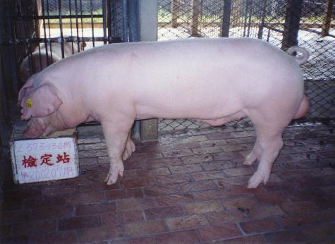 中央畜產會200207期L0373-13拍賣照片