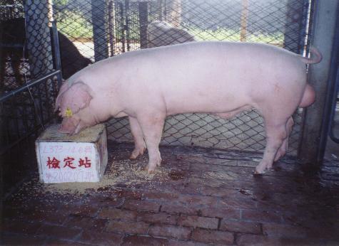中央畜產會200207期L0373-14拍賣照片