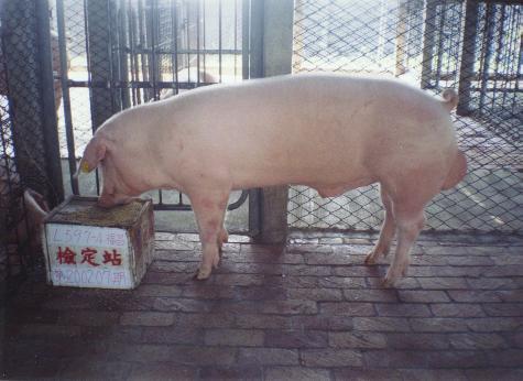 中央畜產會200207期L0597-04拍賣照片
