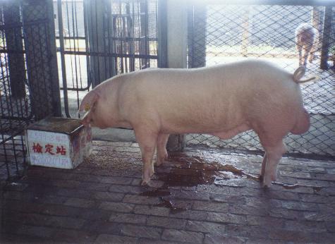 中央畜產會200207期L0599-08拍賣照片