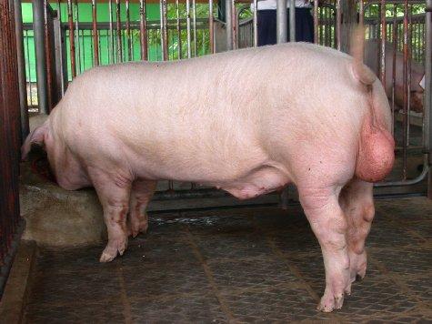 中央畜產會200207期L0628-16體型-全身相片