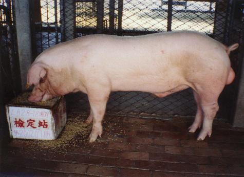 中央畜產會200207期L0628-18拍賣照片