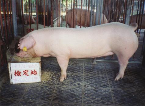 中央畜產會200207期L0974-10拍賣照片