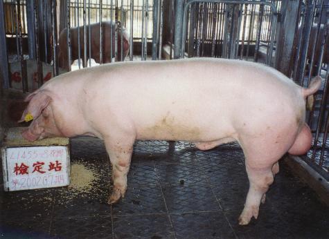 中央畜產會200207期L1455-08拍賣照片