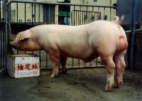 中央畜產會200209期L0020-08拍賣照片
