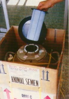 精液品質與保存 - 冷凍精液保存桶
