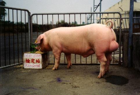 中央畜產會200209期L0406-10拍賣照片