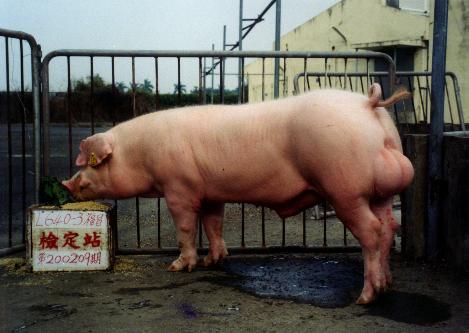 中央畜產會200209期L0640-03拍賣照片