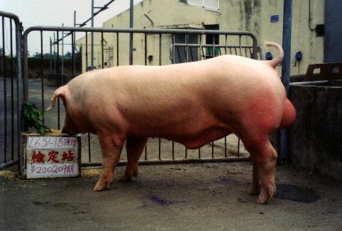 中央畜產會200209期L0651-18拍賣照片