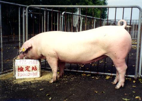 中央畜產會200209期L0978-15拍賣照片