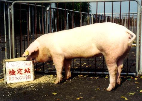 中央畜產會200209期L1475-05拍賣照片