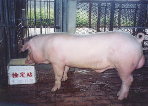 中央畜產會200211期L0030-03拍賣照片