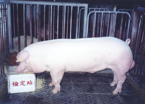 中央畜產會200211期L0443-10拍賣照片