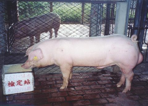 中央畜產會200211期L0621-13拍賣照片
