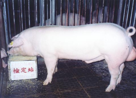 中央畜產會200211期L0672-16拍賣照片