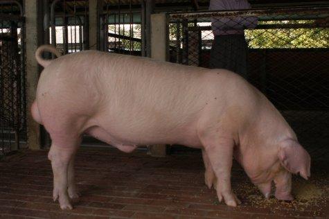 中央畜產會200211期L1003-08體型-全身相片
